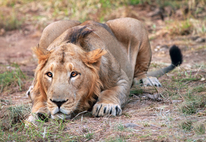 Gir National Park & Sasan Gir Sanctuary