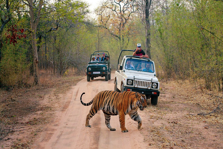 Ranthambore National Park in Rajasthan